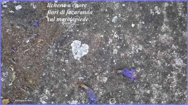 Dessi-lichene a cuoreNew