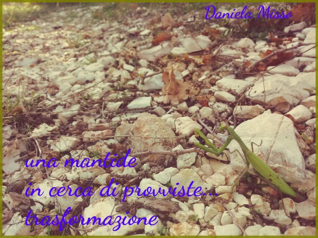 MISSO_MantideNew