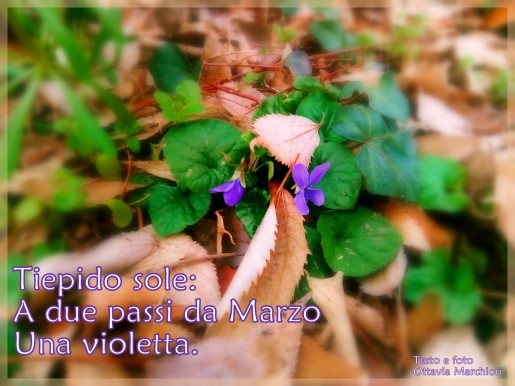 Marchiori_VioletteNew