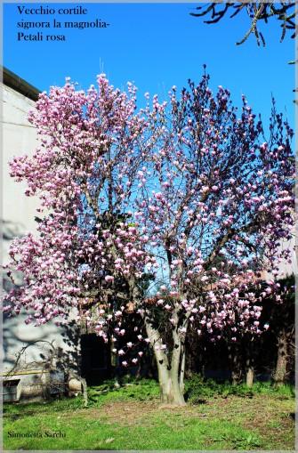 magnoliaNew