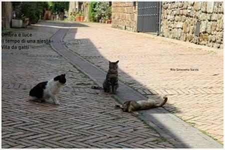 Sarchi-vita da gatti (1)New